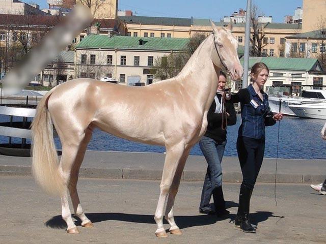 قیمت اسب های اصیل