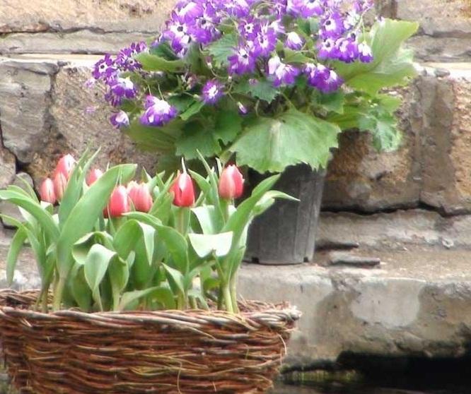 باغ گل محلات