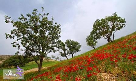 pic148_www.jahaniha.com_11