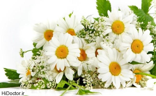 ,بزرگی قلب,علائم بزرگی قلب,طب سنتی و درمان بزرگی قلب,طب سنتی و گیاهان دارویی-داروی گیاهی
