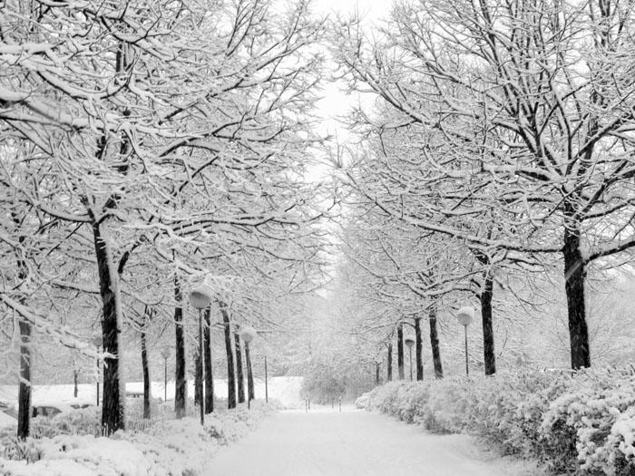 انشا در مورد فصل زمستان ( دو انشاي طنزآلود در مورد زمستان)