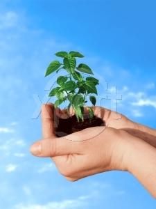 دانلود مقاله محیط زیست و امنیت جهانی - محیط زیست و اسلام