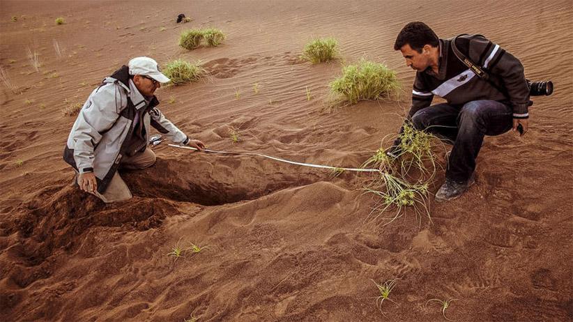 گیاهان در لوت خیلی نادر هستند. حسین آخانی (چپ) و مهدی دهقانی درحال اندازهگیری ریشهی بلند یک جگن هستند. عکس از مصطفی صدر