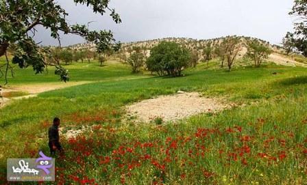 pic148_www.jahaniha.com_4