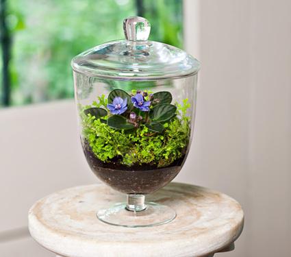 - Kit terrarium plante ...