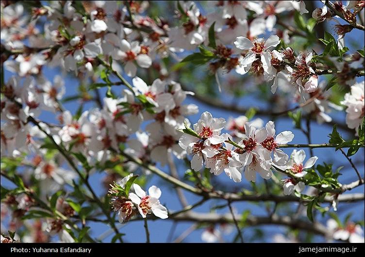 عکس شکوفه,عکسهای شکوفههای بهاری